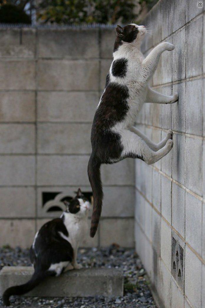Коты, которых не берёт сила притяжения 12