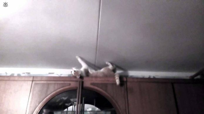 Коты, которых не берёт сила притяжения 13
