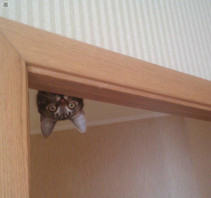 Коты, которых не берёт сила притяжения 15
