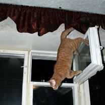 Коты, которых не берёт сила притяжения смешных фото приколов