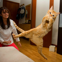 Фото приколы Коты, которых не берёт сила притяжения (16 фото)