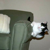 Коты, которых не берёт сила притяжения фото приколы