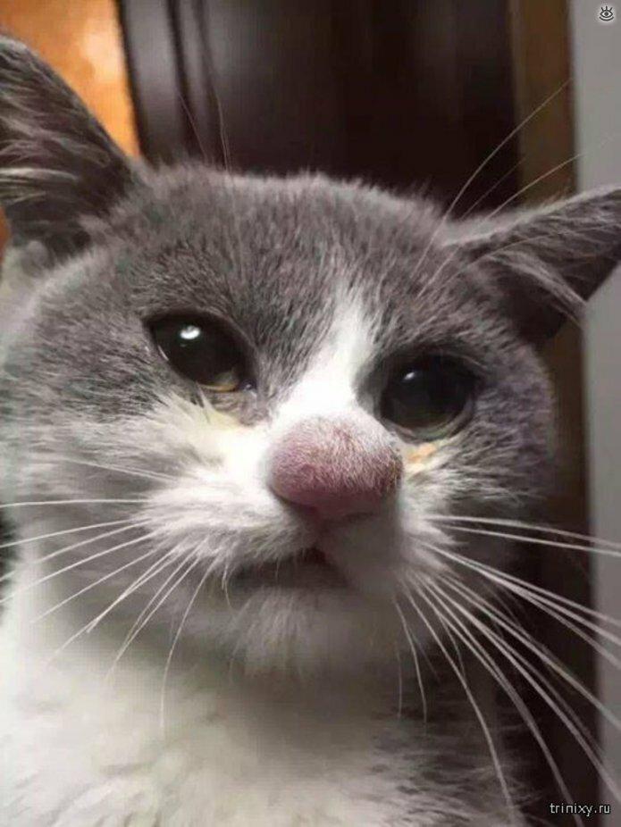 Кошки, пострадавшие от пчёл и ос 0