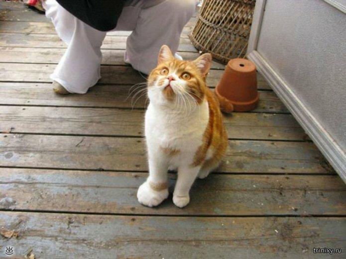 Кошки, пострадавшие от пчёл и ос 3