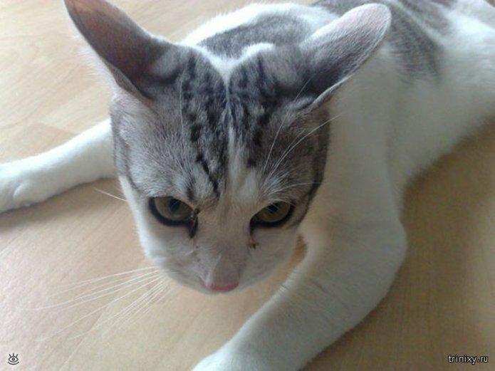 Кошки, пострадавшие от пчёл и ос 5