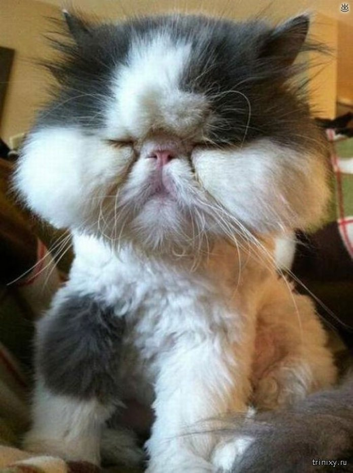 Кошки, пострадавшие от пчёл и ос 6
