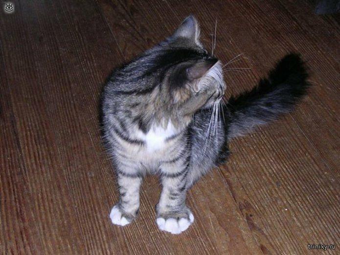 Кошки, пострадавшие от пчёл и ос 7