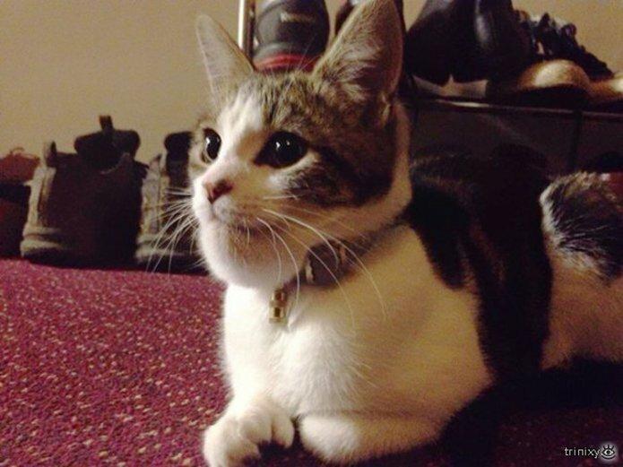Кошки, пострадавшие от пчёл и ос 11