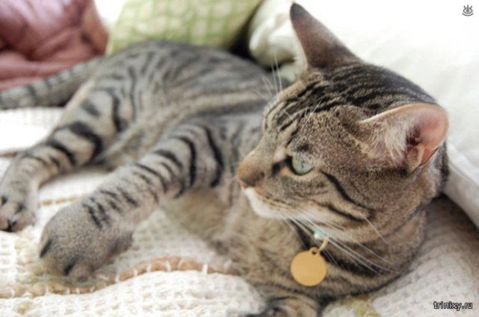 Кошки, пострадавшие от пчёл и ос 13