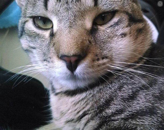 Кошки, пострадавшие от пчёл и ос 16