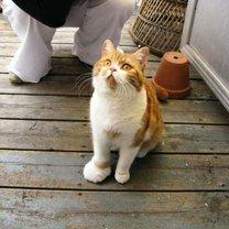 Фото приколы Кошки, пострадавшие от пчёл и ос (20 фото)