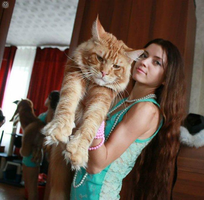 Самые большие кошки в мире 17