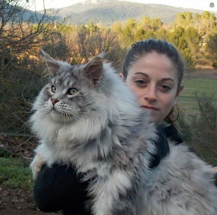 Самые большие кошки в мире 28