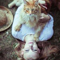 Самые большие кошки в мире смешных фото приколов