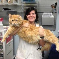 Фото приколы Самые большие кошки в мире (29 фото)