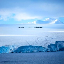 Фото приколы Волшебная Антарктида (16 фото)