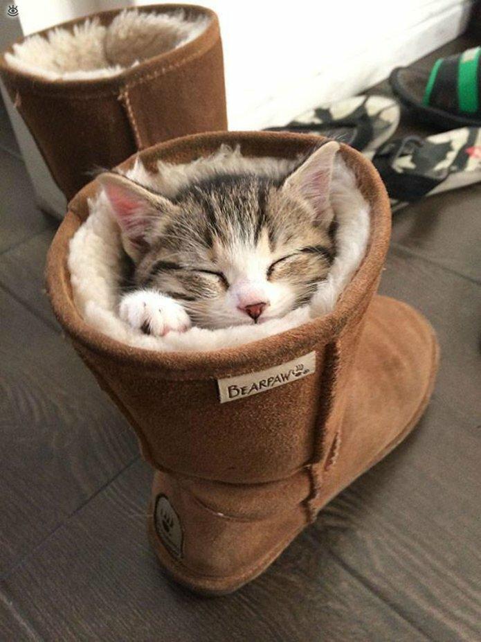 Как умеют спать кошки 1