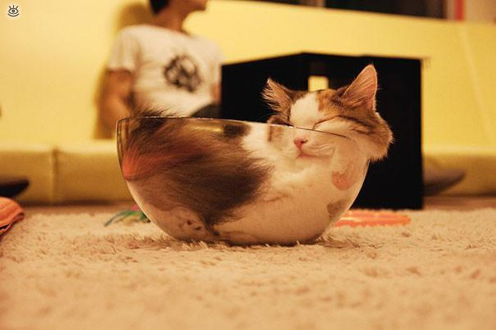 Как умеют спать кошки 2