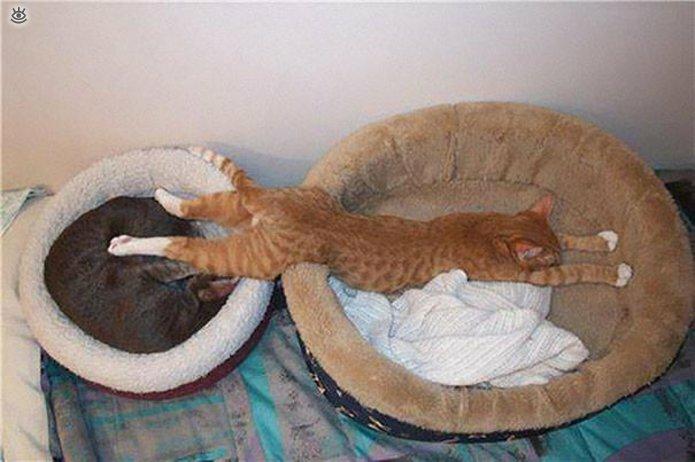 Как умеют спать кошки 3