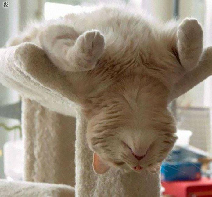 Как умеют спать кошки 5
