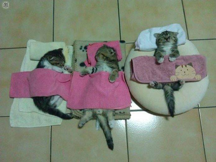 Как умеют спать кошки 7