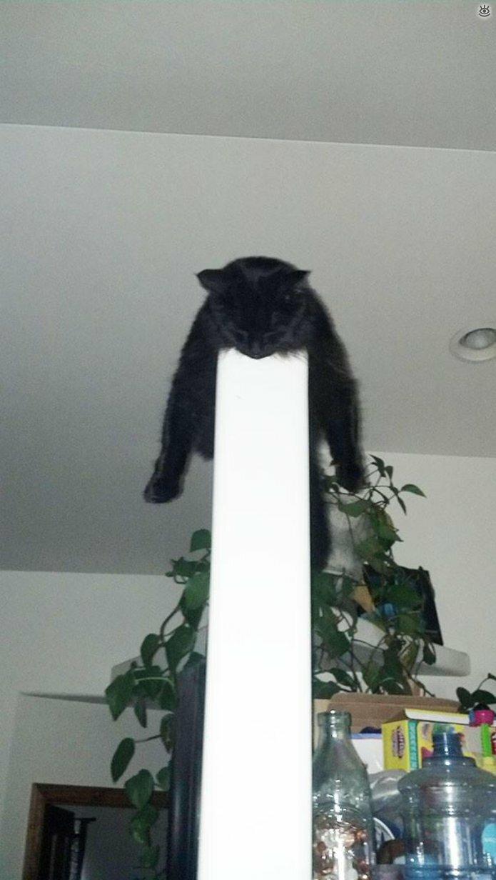 Как умеют спать кошки 13