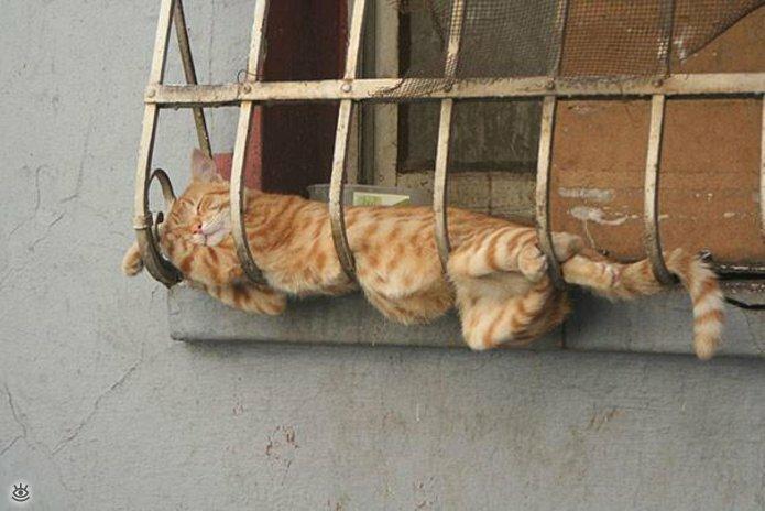 Как умеют спать кошки 20