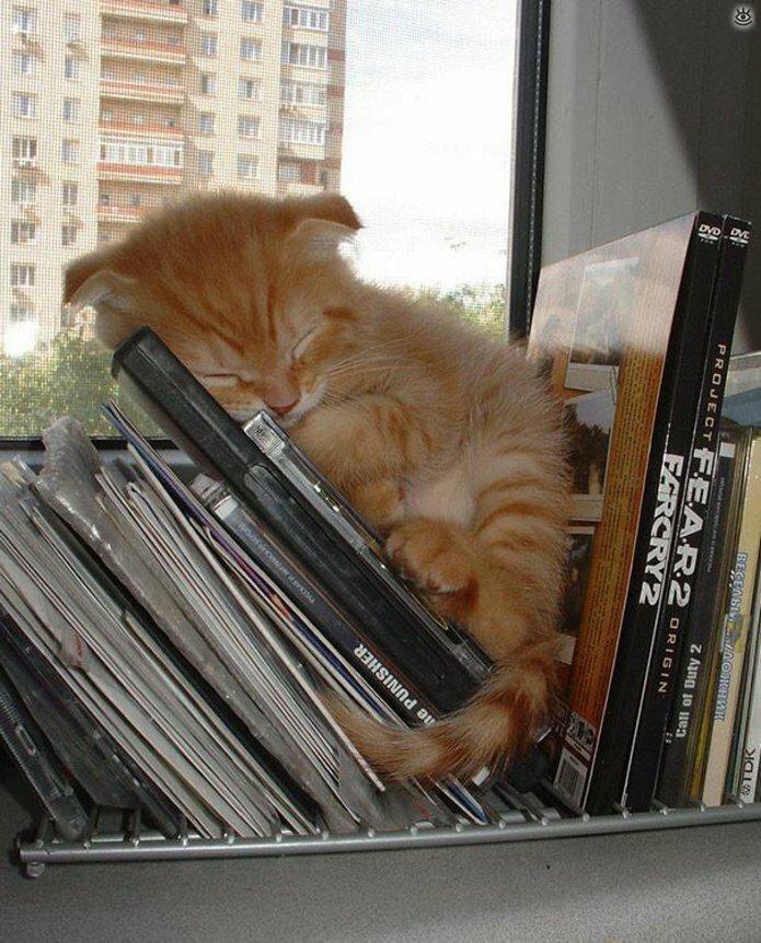Как умеют спать кошки 24