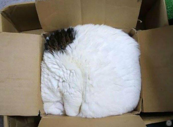 Как умеют спать кошки 25