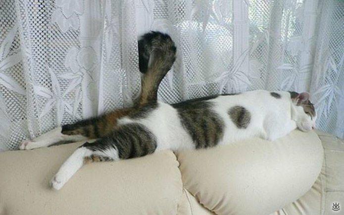 Как умеют спать кошки 26