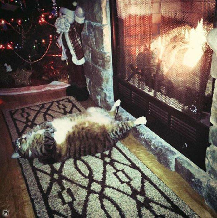 Как умеют спать кошки 27