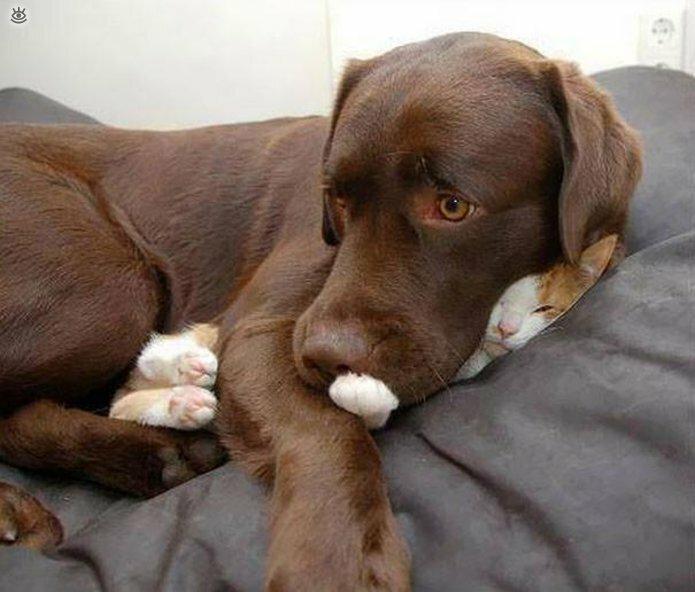 Как умеют спать кошки 29