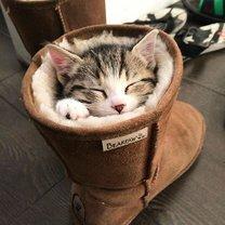 Фото приколы Как умеют спать кошки (30 фото)