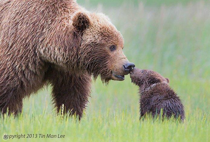 Семейные фото животных 0