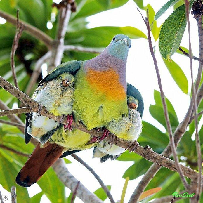 Семейные фото животных 2