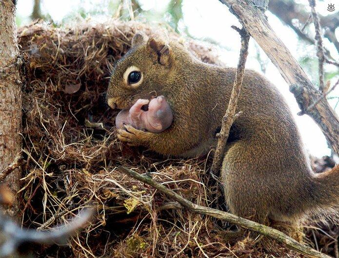 Семейные фото животных 3