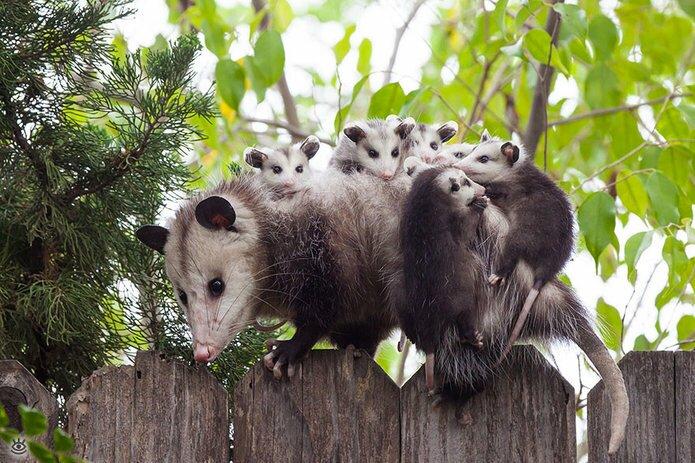 Семейные фото животных 4