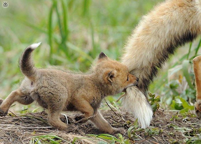 Семейные фото животных 5