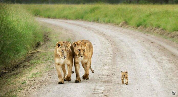 Семейные фото животных 6