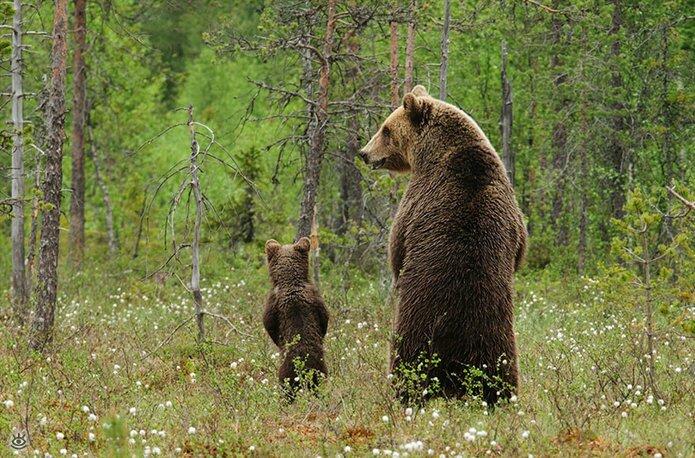 Семейные фото животных 7