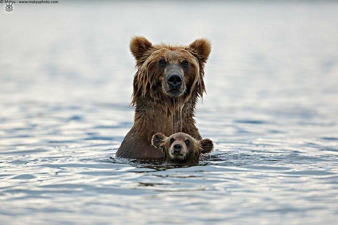Семейные фото животных 8