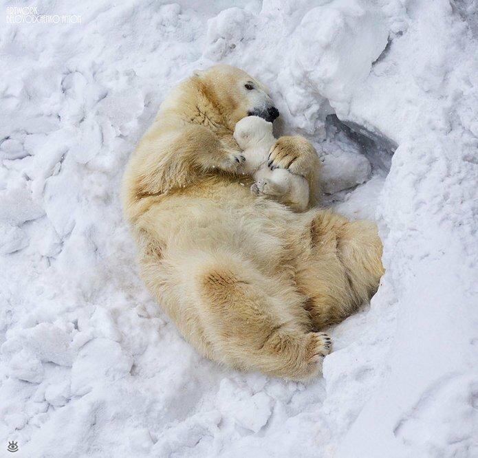 Семейные фото животных 9