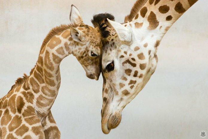 Семейные фото животных 10