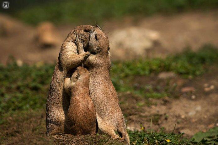 Семейные фото животных 15