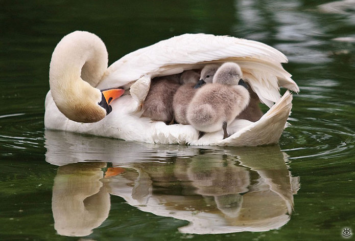 Семейные фото животных 16