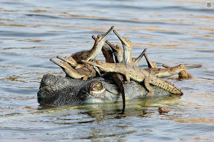 Семейные фото животных 17