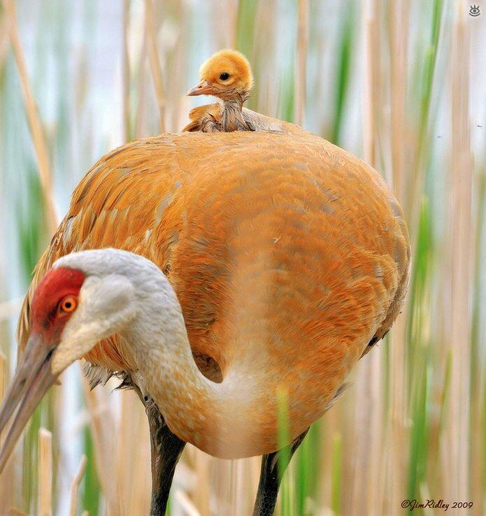 Семейные фото животных 18