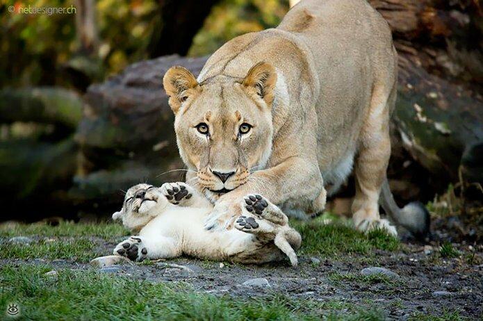 Семейные фото животных 21