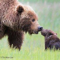 Семейные фото животных