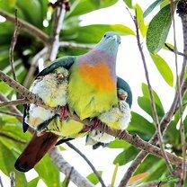 Фото приколы Семейные фото животных (25 фото)